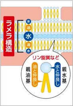 ラメラ拡大.jpg